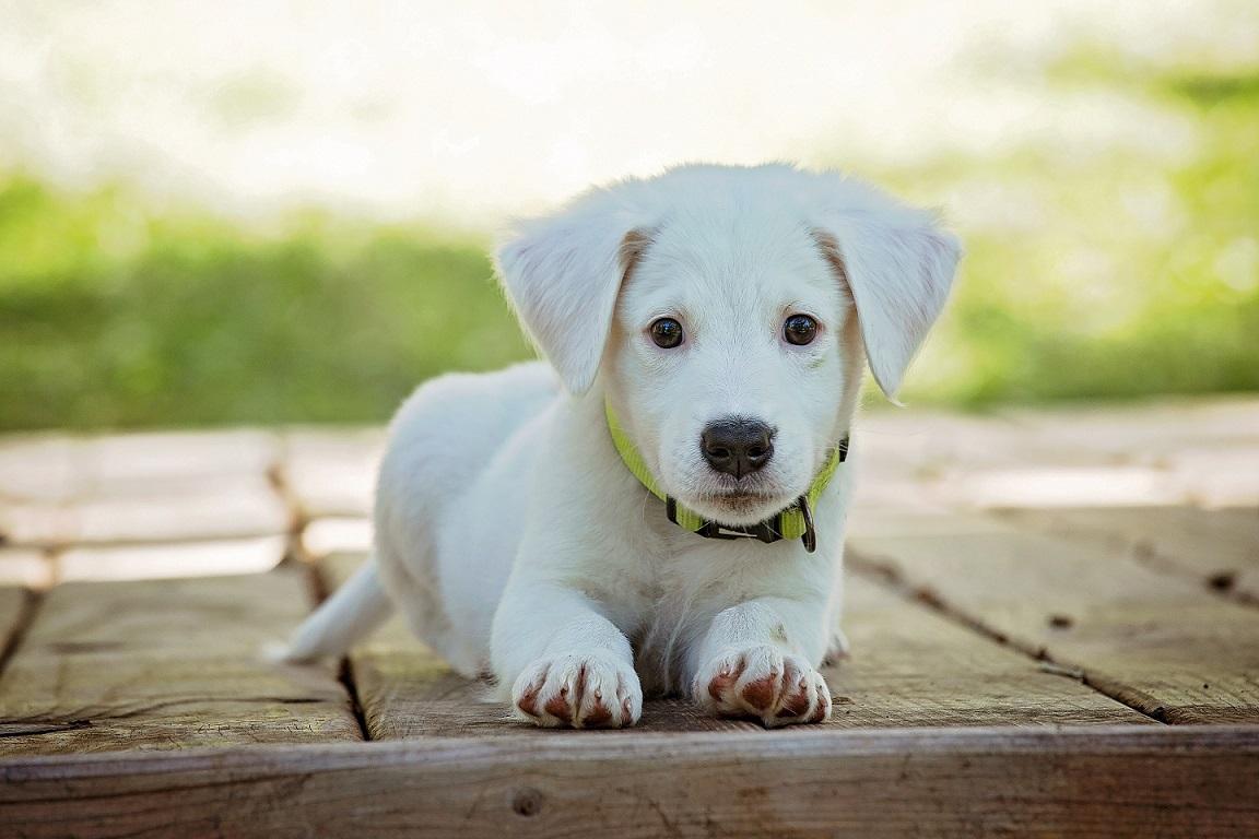 Как назвать собаку, подбор клички