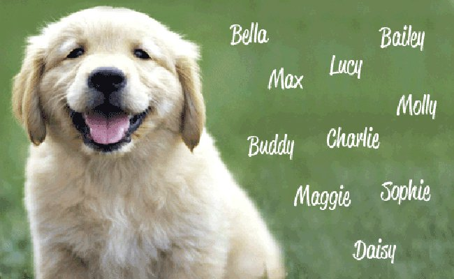 Как назвать собаку, калькулятор подбора клички по полу, породе и астральному числу