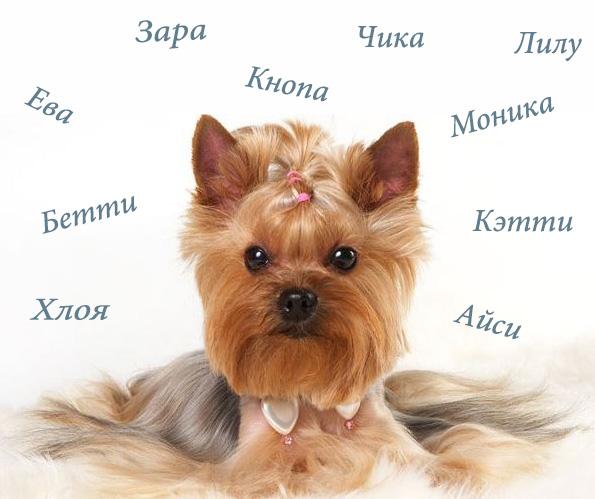 Как назвать собаку, звучные имена