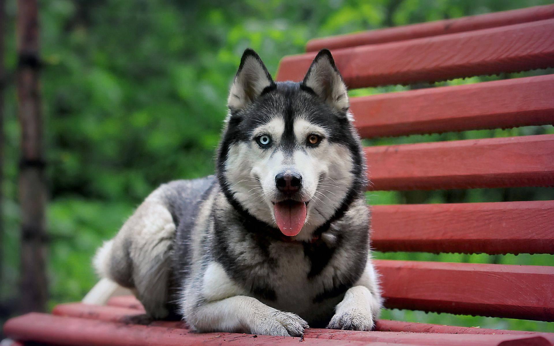 Как назвать собаку, выбор клички для средних пород